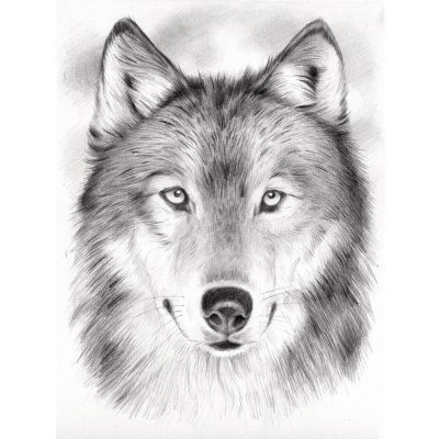 Wolf Malen Mit Bleistiften Nach Zahlen Malvorlage