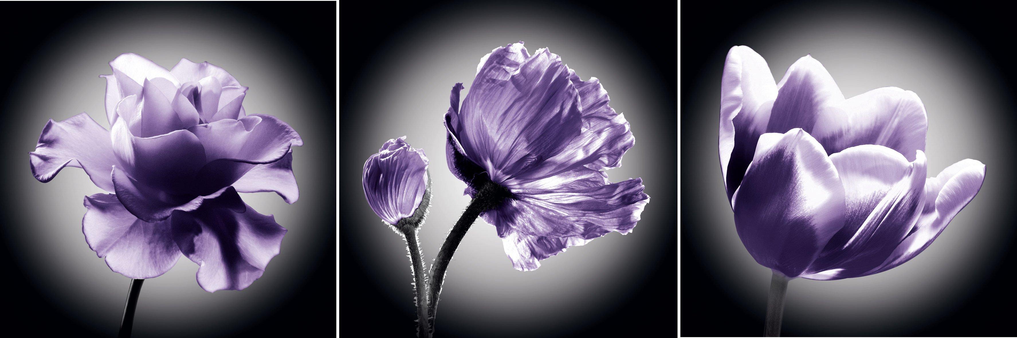 Blau Blühende Pflanzen Und Blumen Bestimmen – motelindio.info